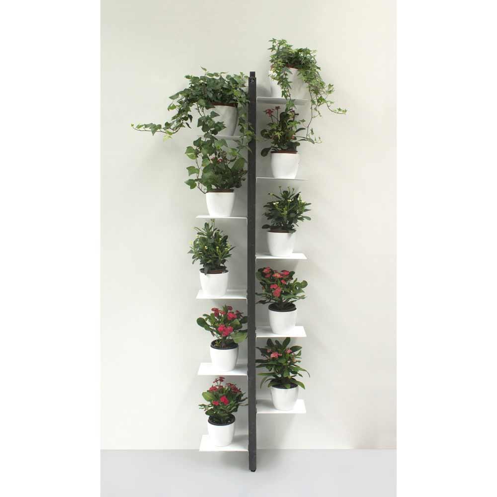 Porte plantes de design moderne zia flora fixer au mur for Porte plantes interieur