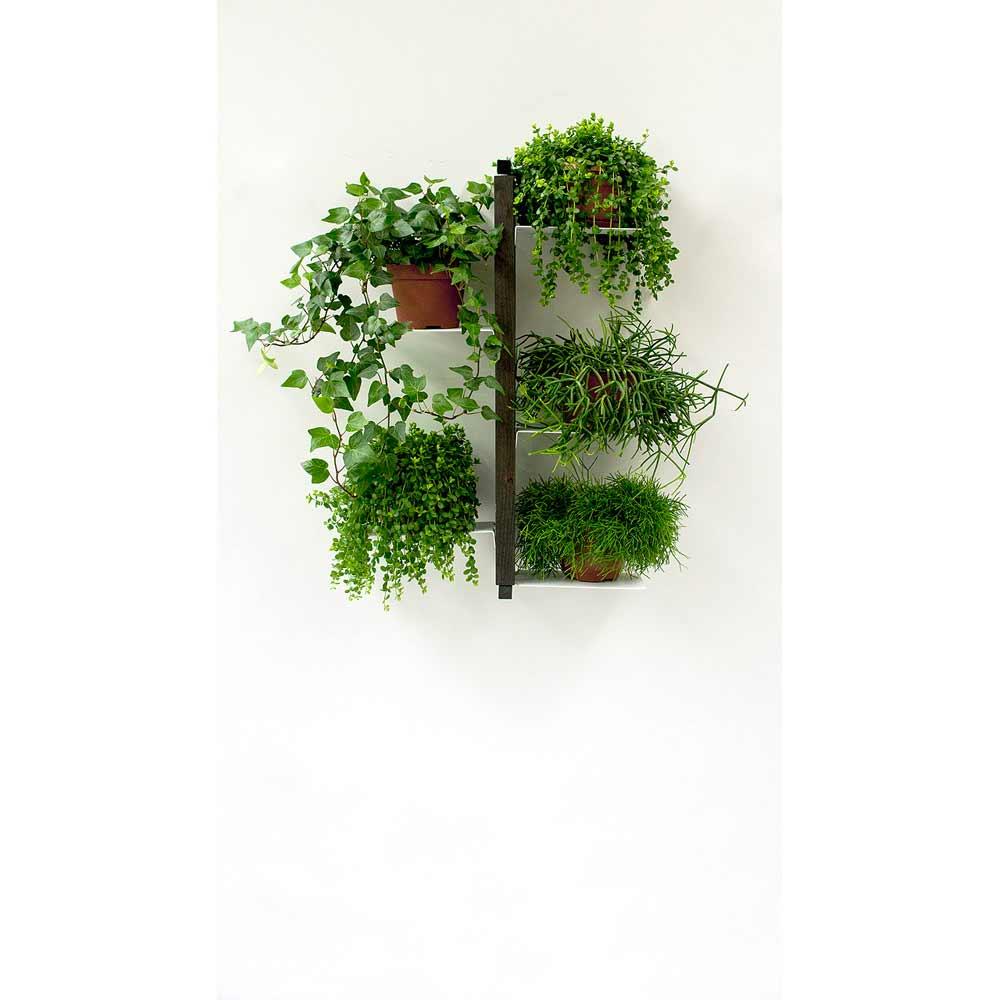 Porte plantes de design moderne zia flora suspendu - Porte plante mural ...